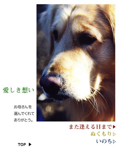inochi表紙.jpg